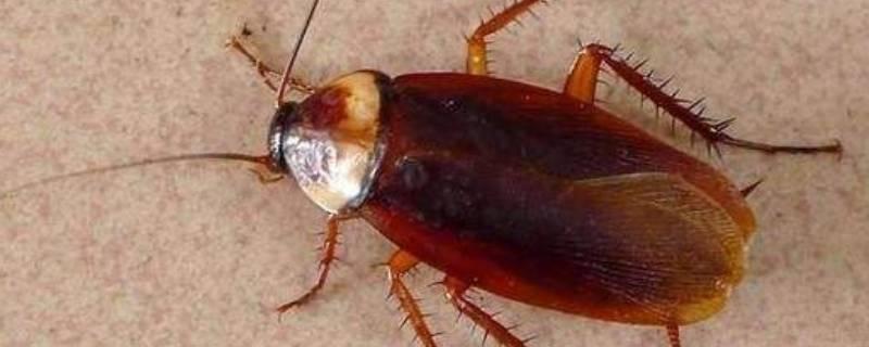 为什么房间里有蟑螂