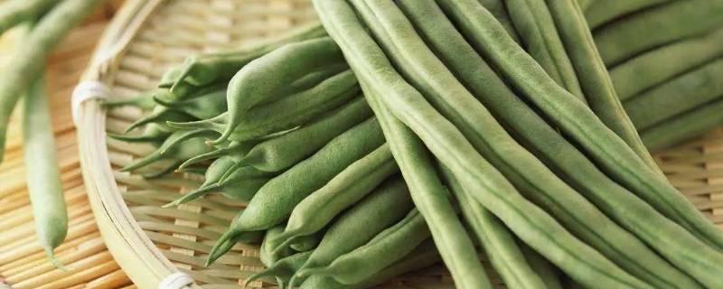 吃不完的四季豆怎么保存