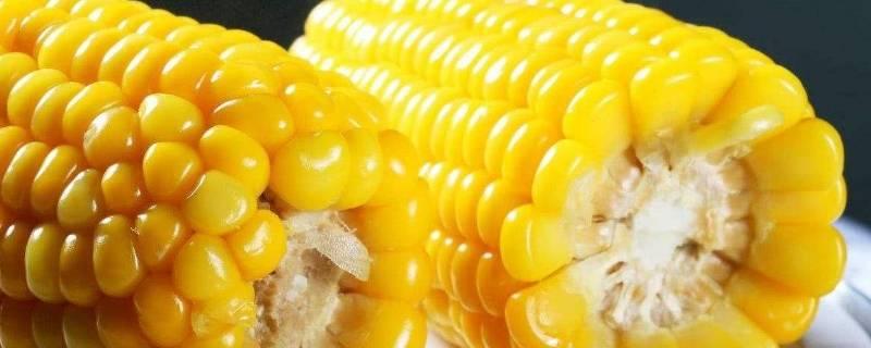 玉米可以多吃吗