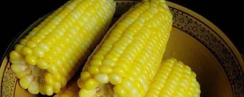 玉米一般煮多长时间