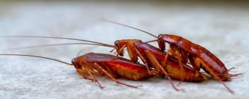 家里蟑螂多的原因