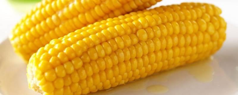 玉米是助消化还是难消化的