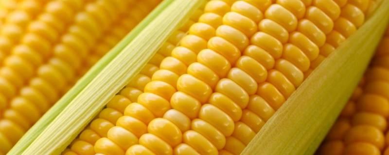 水果玉米为什么不能吃