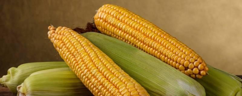 煮玉米什么时候放盐