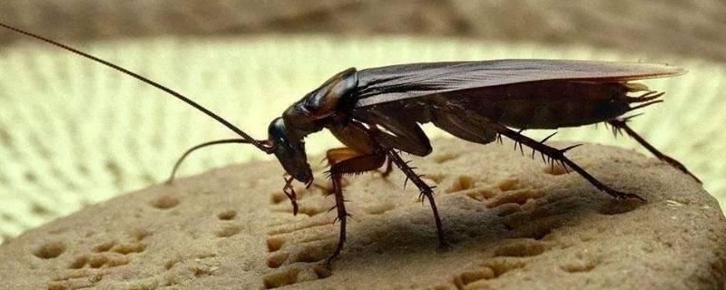 房间蟑螂如何彻底清除