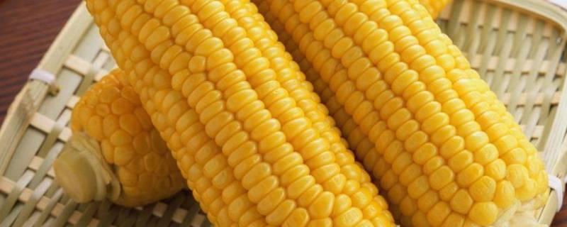煮玉米放盐起什么作用