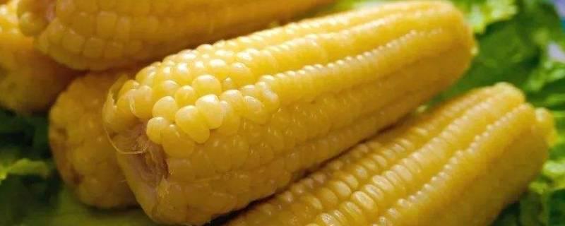 玉米隔水蒸多久能熟