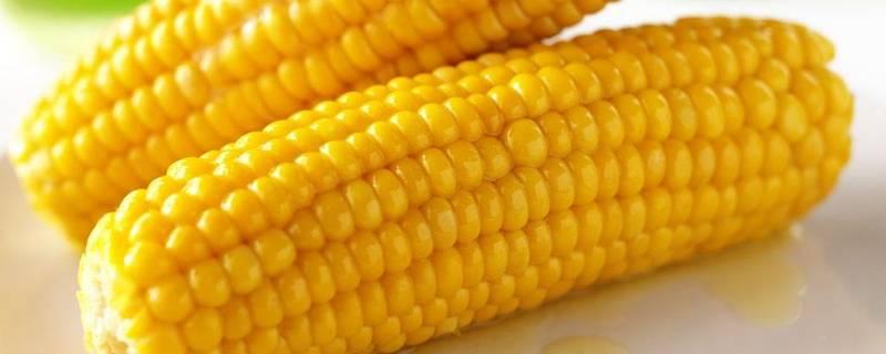玉米变硬怎么快速变软
