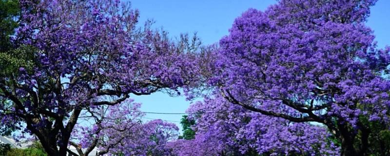 紫色的分類