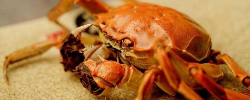 怎么养螃蟹活的时间长