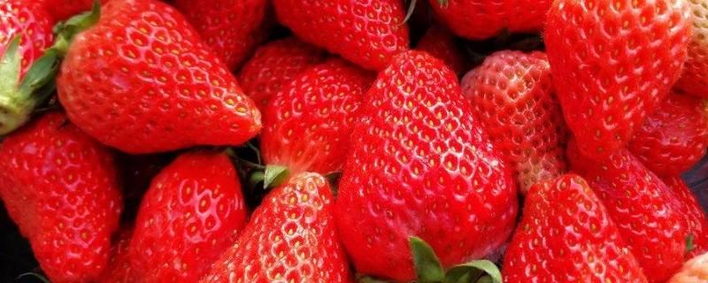草莓的形状和特征怎么描述