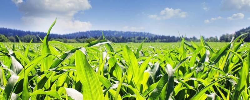 绿色食品标志的主要构成元素有哪三个