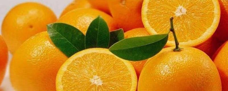 橙子有几种品种