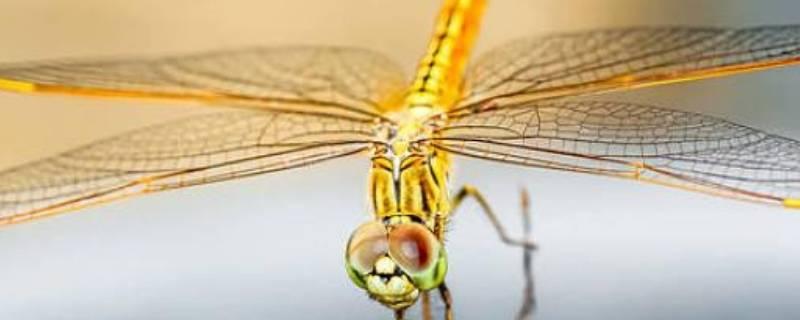 常见益虫有哪些昆虫