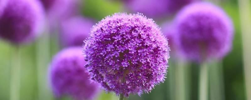 花店怎么保存鲜花