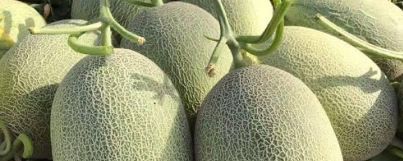 带瓜的水果