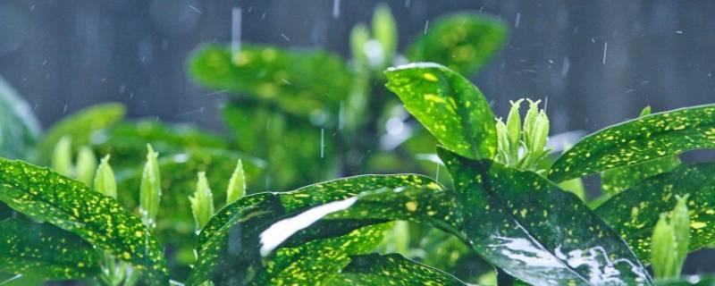 阵雨和雷阵雨的区别是什么