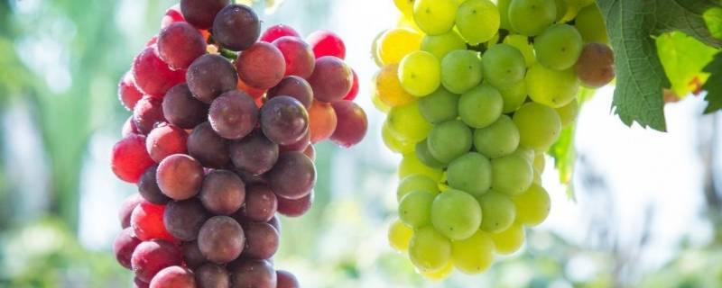葡萄上供是什么寓意