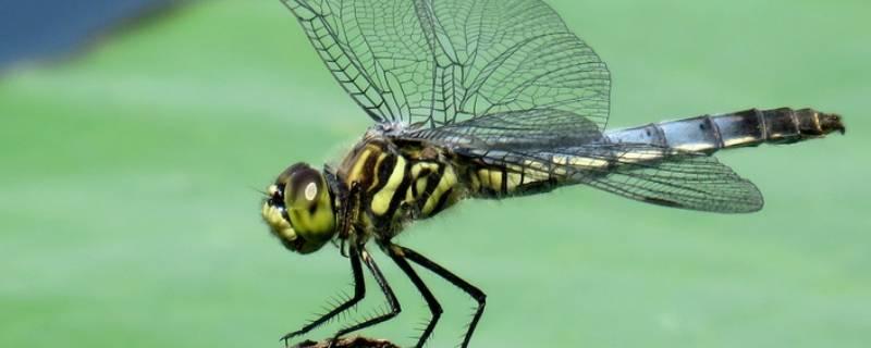 天上好多蜻蜓是怎么回事