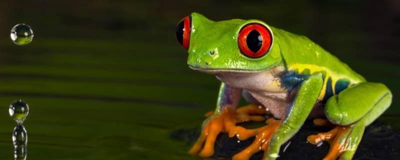 下雨的时候青蛙为什么会叫